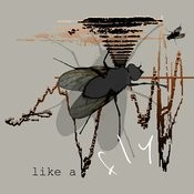 Like A Fly Songs
