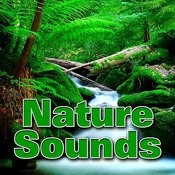 Nature Sounds Songs