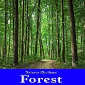 Natures Rhythms: Forest Songs