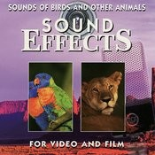 Sounds Of Birds And Other Animals Songs