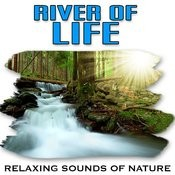 Small River Rapids Restore Peace Of Mind Song