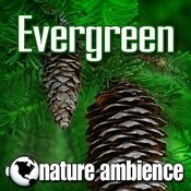 Evergreen (Music With Nature Sounds) Songs