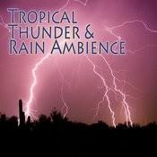Tropical Dawn & Thunder Song
