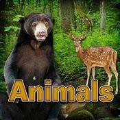 Animals Songs