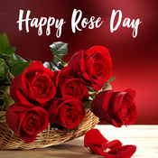 Rose Day Hindi